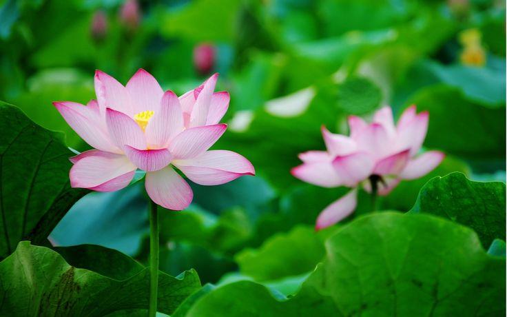 Водные растения - Водные Растения в Казани