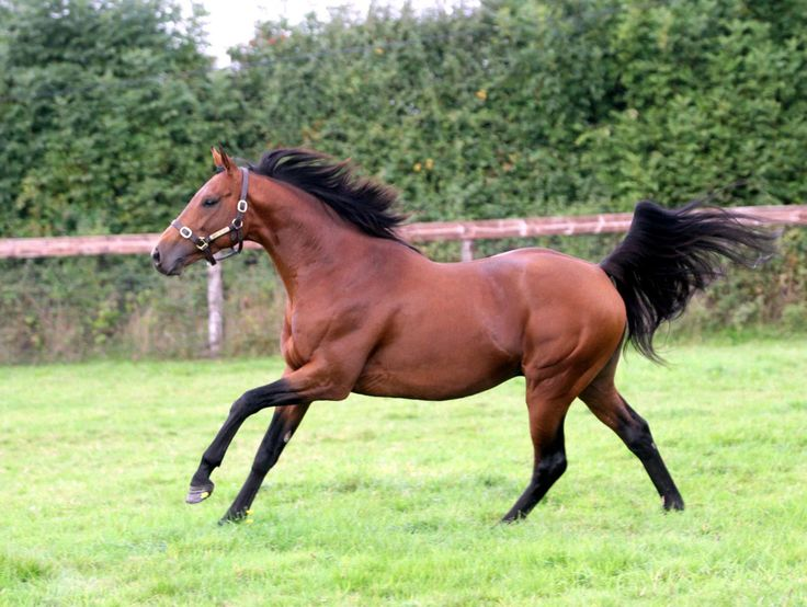 840 Best Images About Stallions Of The Racing Kind On