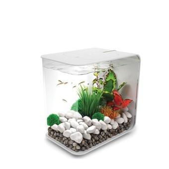 Cute little fish tank