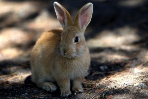 If you love animals you've got to choose certified #CrueltyFree beauty and personal care products.Rabbit, Beautiful Care, Talisman Animal, Display Inspiration, Bunnies Everywh, Labs Animal, Windows Display, Blog, Nature Beautiful