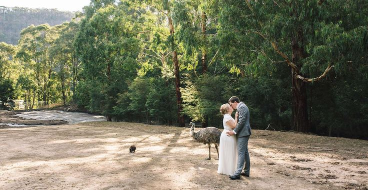 Katie and Martin got married at Secret Creek Cafe - a charming and unique Blue Mountains venue set in a wildlife sanctuary, with some special furry guests.