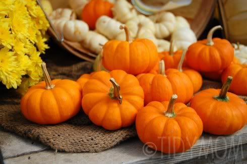how to preserve pumpkins for carving