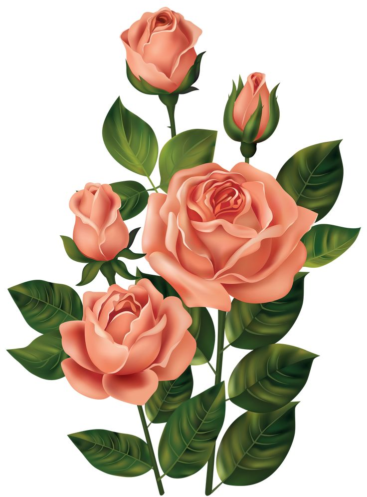 Roses_PNG_Clipart_Image-455354616.png (3696×5000) | розы ...