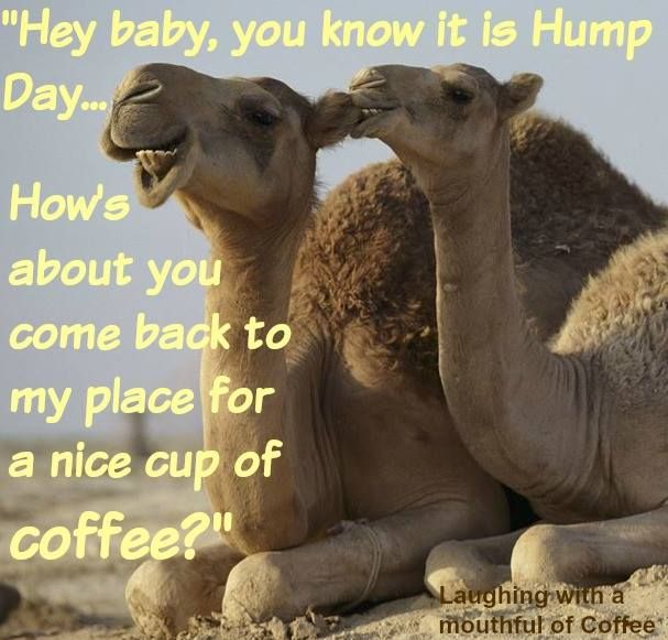 Best Hump Day Quotes: 40 Best Images About Hump Day On Pinterest