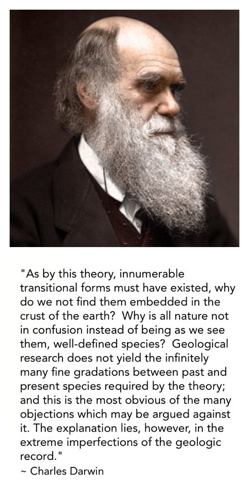 "Darwin knew what was needed to prove his theory of macro evolution to be true - transitional forms, one species turning into another.  He said the problem was the lack of geologic records.  Well after a 150 more years of geologic research, still no transitional forms.  - His quote from ""The Origin of Species"", 6th Ed. (London: John Murray, 1872), 49."