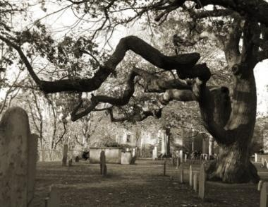 Tree in the cemetery next to the Salem Witch Trial Memorial in Salem, MA