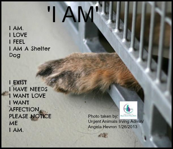 I love, feel, want, have needs,& I want affection. I am a shelter dog...I am waiting for someone to love me.