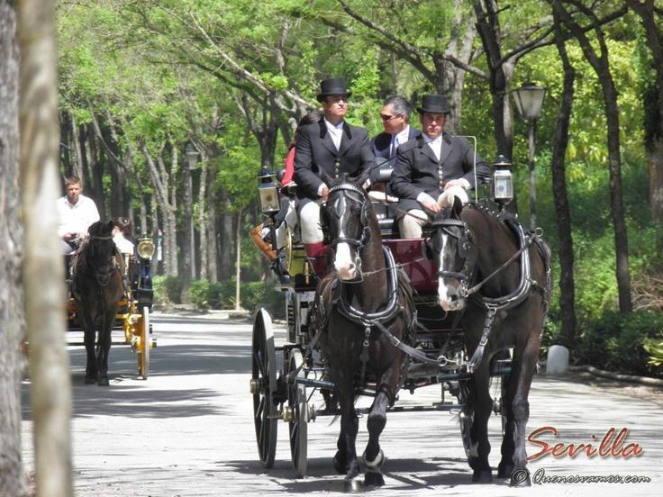 Parque de María Luisa. Paseo en Carro por la ciudad...    http://www.quenosvamos.com/sevilla