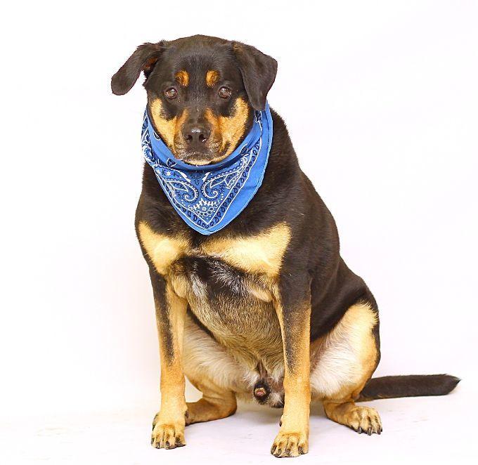 Adopt Rocky On Rottweiler Rottweiler Mix Puppy Stages