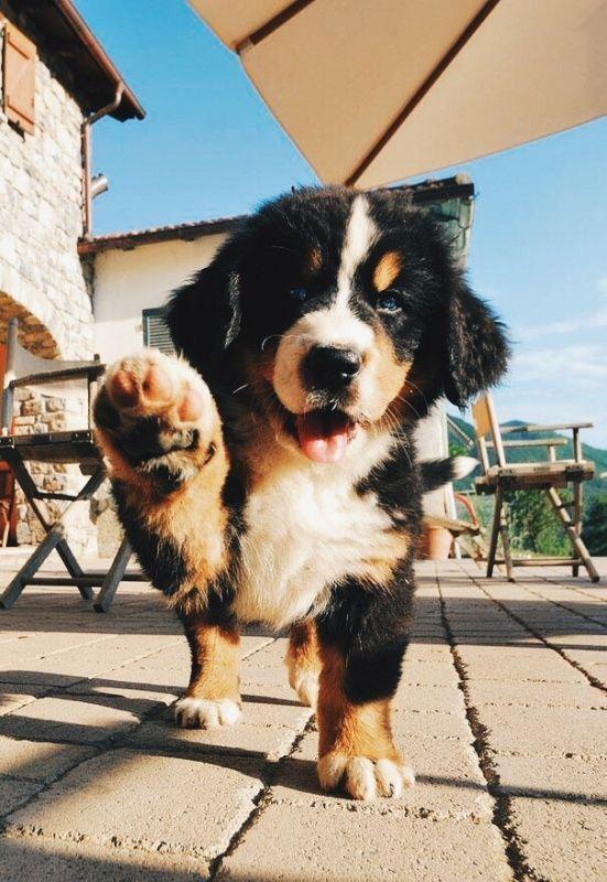Hoteles que aceptan mascotas de CDMX    – Animais