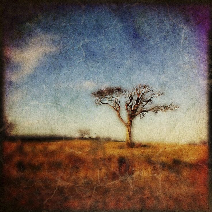 Rihanna Tree, Ltd Ed of 15