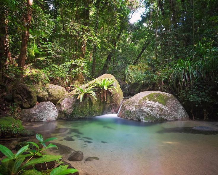 There is just something magical about #MossmanGorge Explore at your own pace or take a guided Dreamtime Walk tour through the ancient rainforest |  by @travelsofsophie