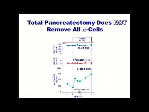 The Glucagon-Centric Theory of Diabetes Pathology | Paleo Diabetic
