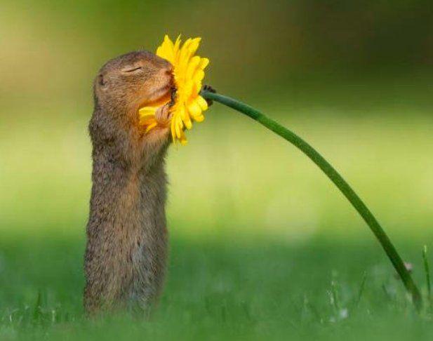 ゆきちゃん On Twitter ジリス 面白い動物 動物