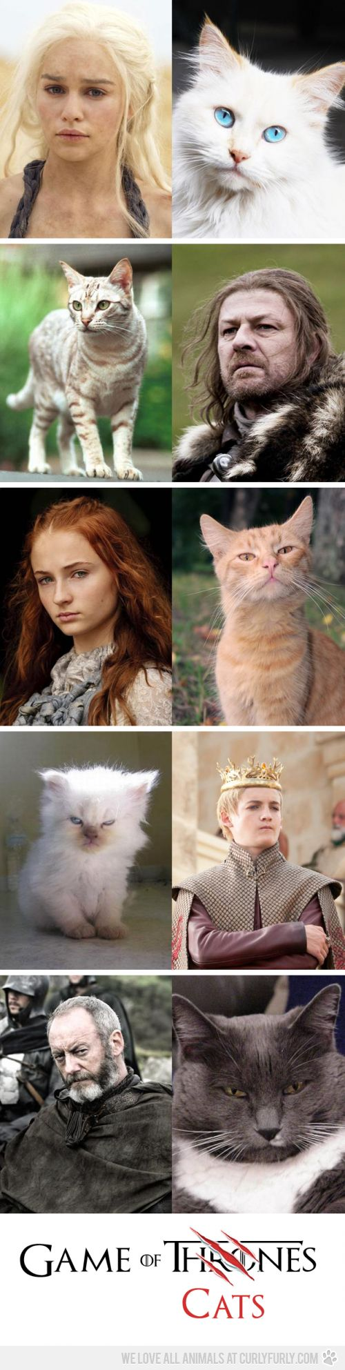 Because Kayla likes GoT...and cats... I give you Game of Cats! Gotta say, I love the Joffery cat :D