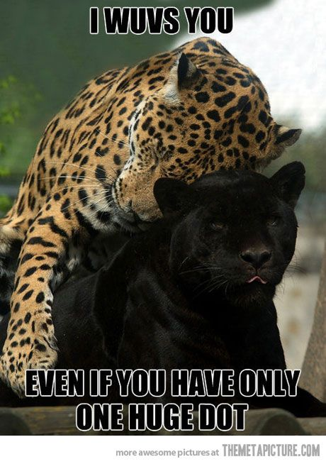 D'awww <3     I repinned it because I love leopards but also because the leopard is hugging A FREAKING PANTHER! Awesome-sauce