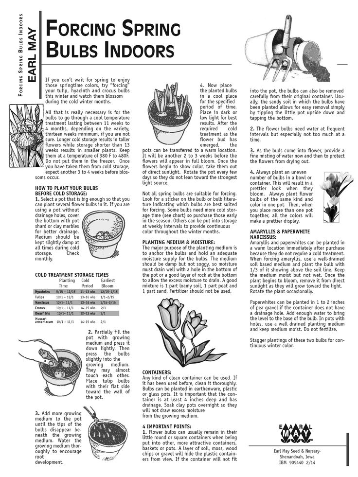15 best bulbs for the midwest images on pinterest bulb bulbs and lamps for Earl may nursery garden center
