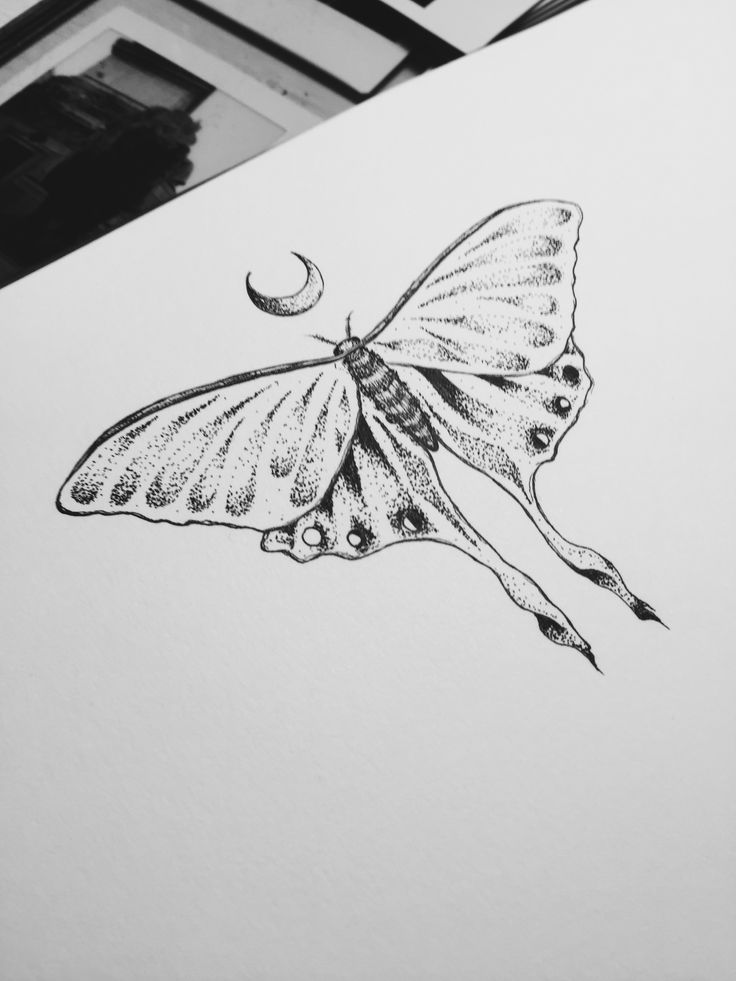 luna moth tattoo design mandala henna moon dotwork