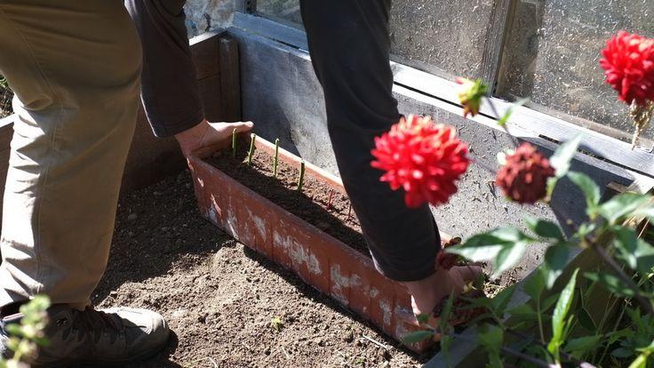 Bouturer un rosier