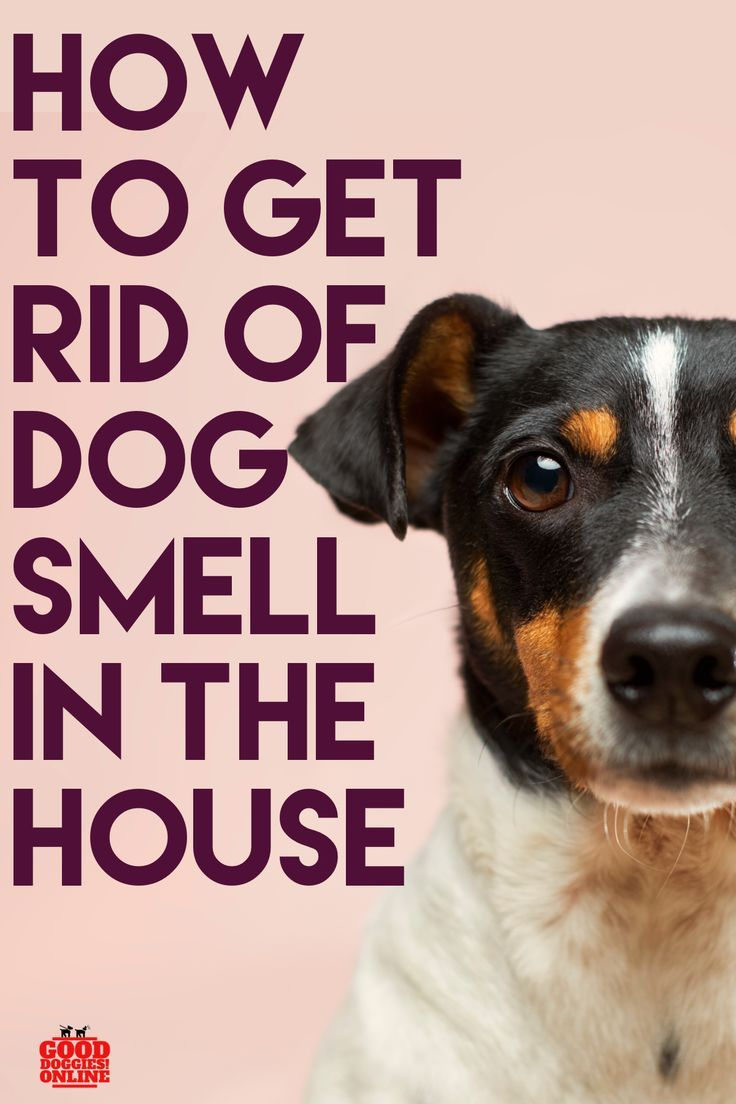 How To Get Rid Of Dog Smell In The House Dog Smells Dogs Dog Show