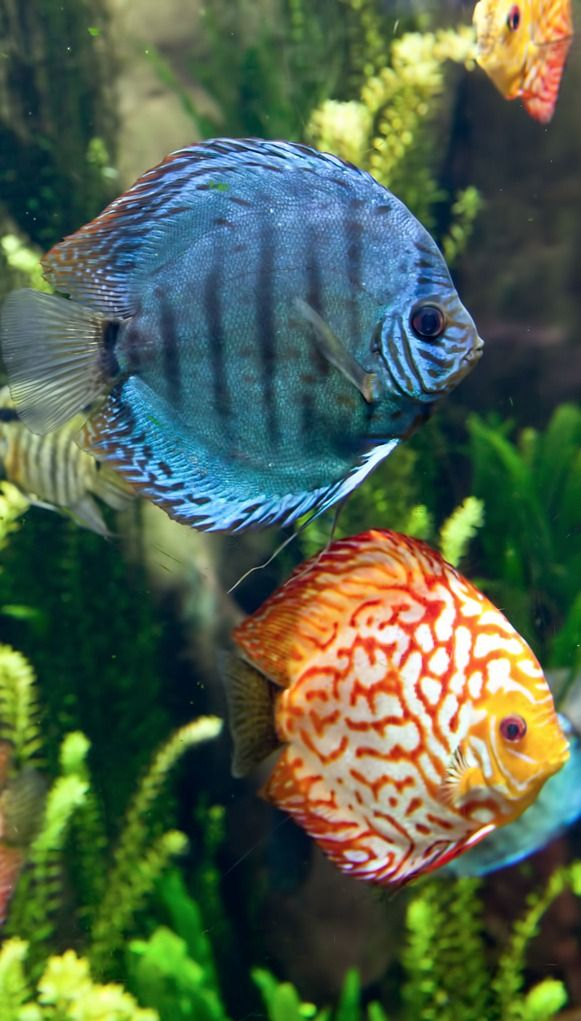 108 best aquariums images on pinterest aquariums fish for Beautiful tropical fish