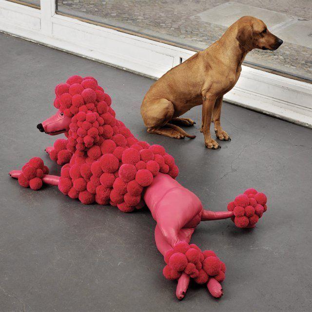 Fancy   Pompon Poodle