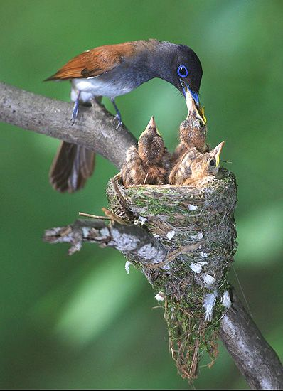 희귀조류 '긴꼬리딱새' 창원에 둥지