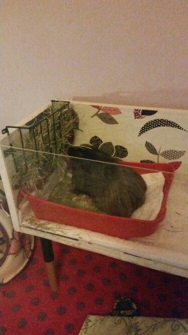Pepito in his new kitchen area