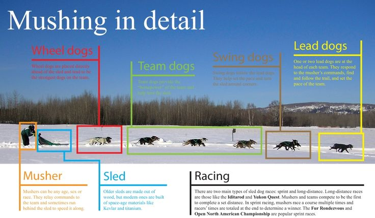 Meet the Canine Athletes - Seeing Double Sled Dog Racing