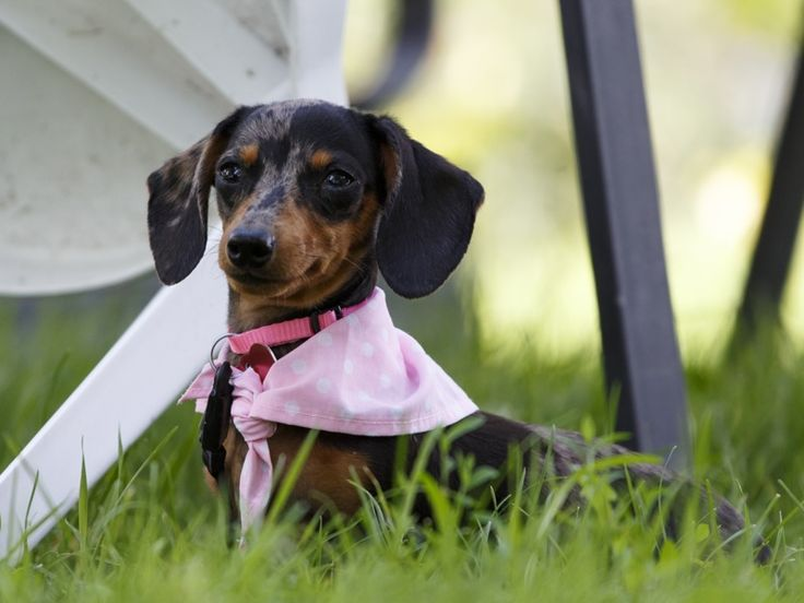 21 Best Our Funny Captions Images On Pinterest Dachshund