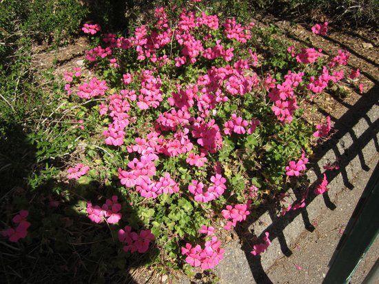 Photo of University of California Riverside Botanic Gardens