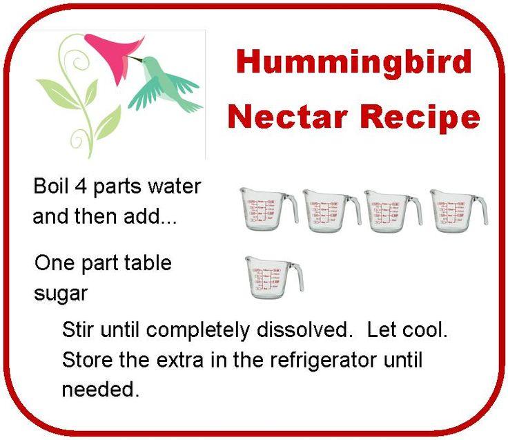 Hummingbird Nectar Recipe Image