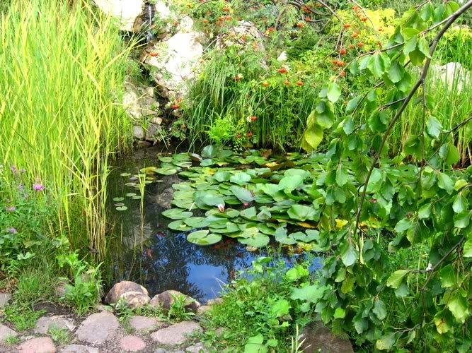17 Best Images About Water Gardens On Pinterest Garden Water Features Small Water Gardens And