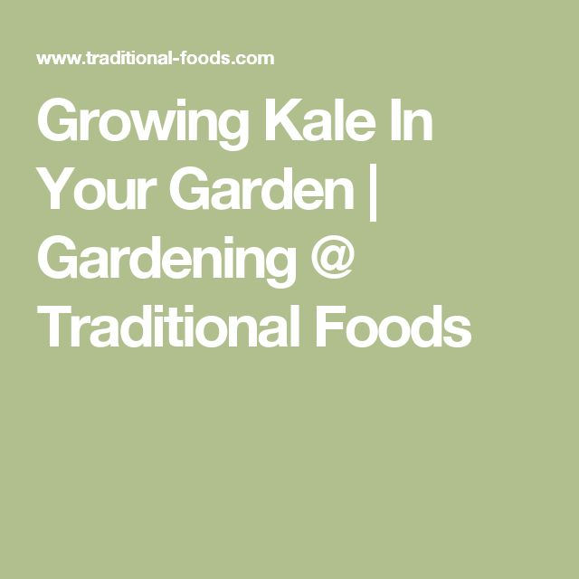 Growing Kale In Your Garden | Gardening @ Traditional Foods