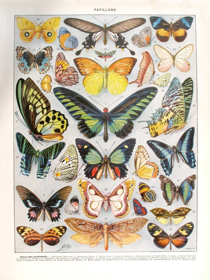 1933 Vintage BUTTERFLIES French