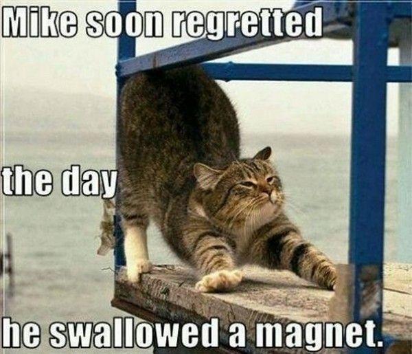 30 funny animal captions (30 pics)