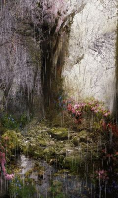 Download Animated 240x400 171 Rainy Forest 187 Cell Phone