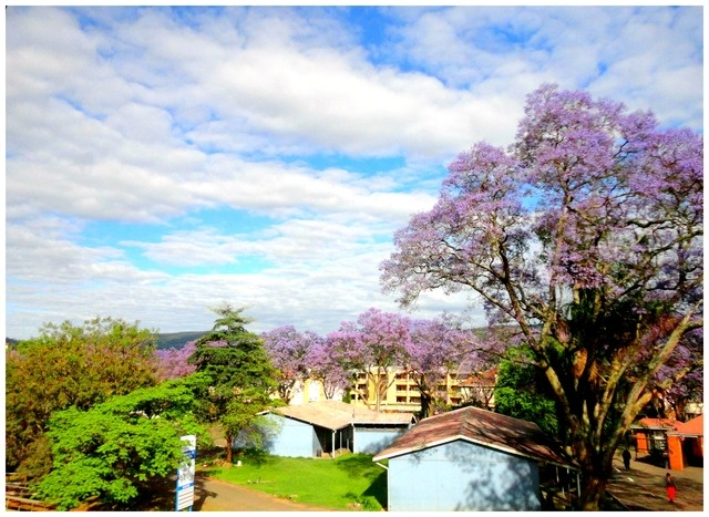 Nature in Pietermaritzburg, South Africa - a photo by shauno