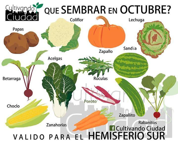 Si tienes una huerta estas son las semillas que puedes for Dia del arbol 01 de septiembre