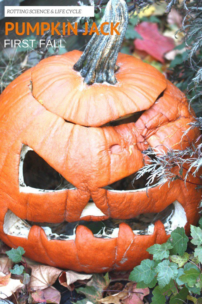 Pumpkin Jack Life Cycle Science Fall Book Activity