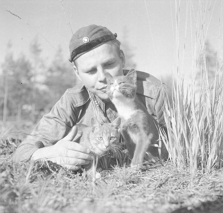 Finnish soldier playing with kittens. http://zveri_zveri.livejournal.com/   http://sa-kuva.fi