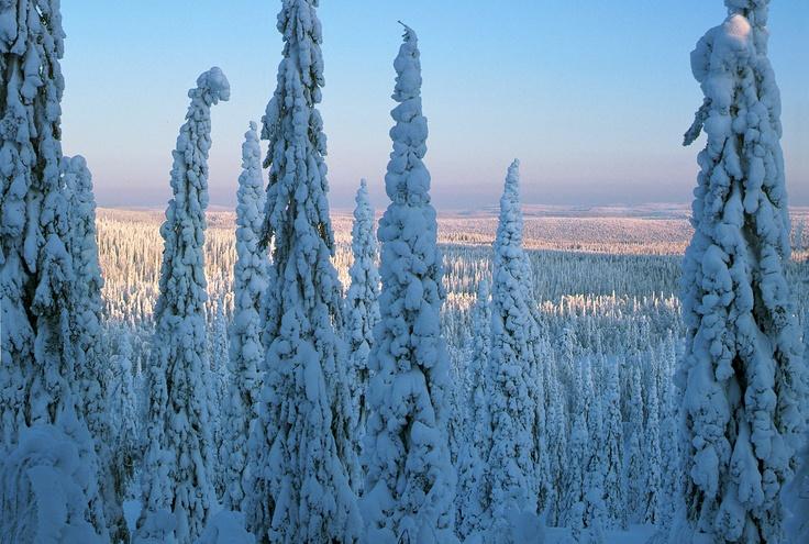 Ténéré Viaggi - Lapland        https://www.facebook.com/media/set/?set=a.244038432376714.54247.241339715979919=3
