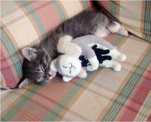 A Cat Is Sleeping With Stuffed Cat <3