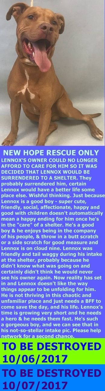 MURDERED 10-7-2017 ---LENNOX - 8605@Manhattan ACC Hello, my name is Lennox My animal id is #8605 I am a male tan dog at the 106 Dog Holding The shelter thinks i am about 5 years 1 months old, 52 lbs  I came into the shelter as a  owner surrender on 2-Oct-2017 with the surrender reason stated as person  circumstance - cannot afford to care for.  http://nycdogs.urgentpodr.org/lennox-8605/