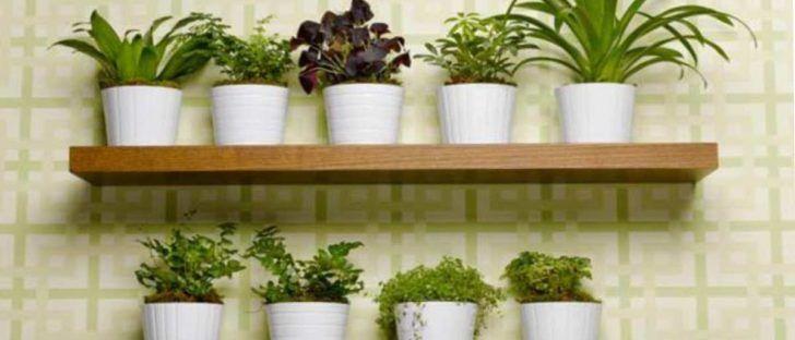10 Hierbas Aromáticas Que Puede Cultivar En Casa Usando Sólo Agua Cultivar Hierba Jardines Pequeños Plantas
