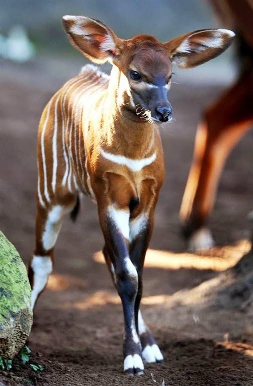 Www Bing Com1 Microsoft Way Redmond: 525 Best Images About Animal Endangered Species On