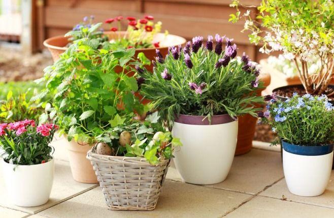 Jak pomóc przetrwać zimę roślinom balkonowym? - Deccoria.pl  Kliknij w zdjęcie, aby zobaczyć więcej!