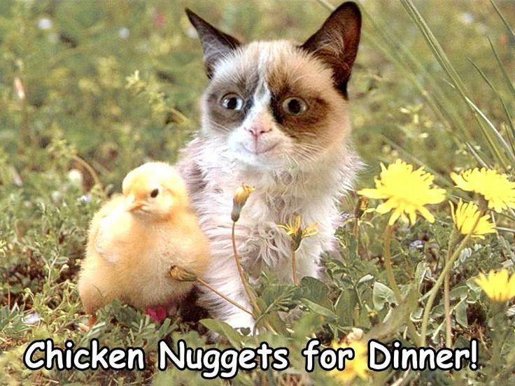 Chicken Pet Quote: Dinner #GrumpyCat #Memes