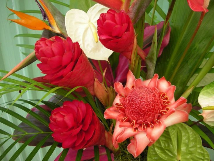 Resultado de imagem para flores lindas e exoticas