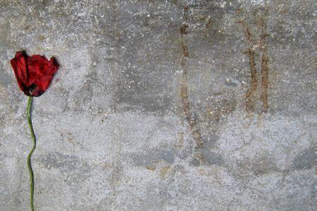 """""""la cultura non la si può ottenere se non si conosce la propria storia…"""" (Dario Fo)   #ricordare il #25aprile e non solo!  Una Serena Giornata, senza dimenticare la Memoria della Storia, a Tutti!!        la redazione de """"imieilibri.it"""" (http://www.imieilibri.it)"""